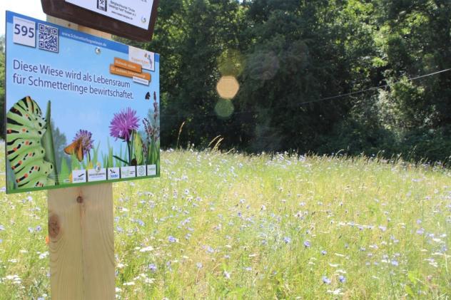 Schmetterlingswiesen, Insekten, Blühwiesen, Naturschutz, Saatgut