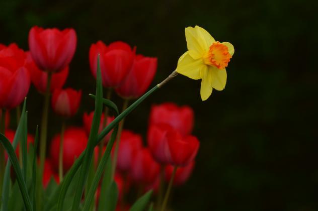 Ostern Blumen Frühling