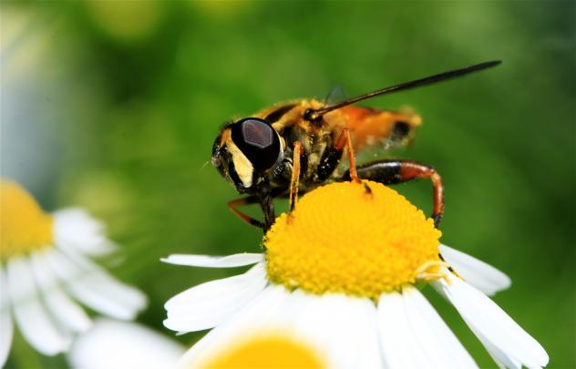 Nabu, Naturschutz, Insektenzählen, Insekten, Natur