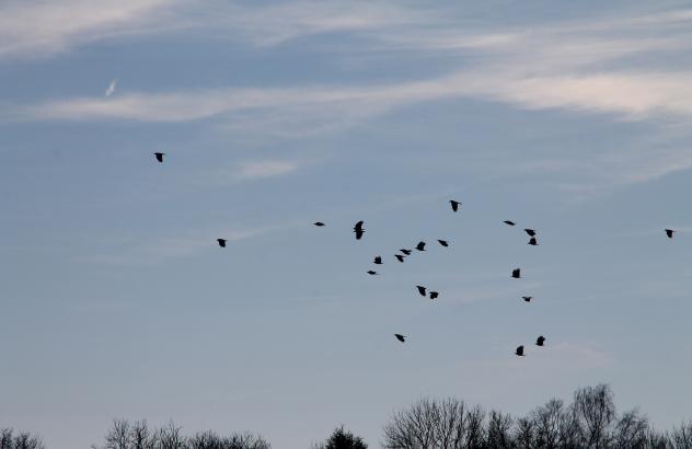 Himmel, Denken, Loslassen, Vögel,