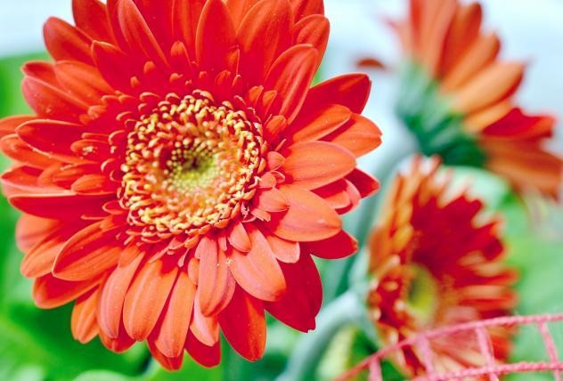 Blumen Frauentag Arbeit
