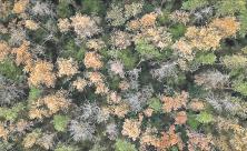 Wald, Waldsterben, tote Bäume