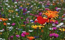 Sommer Wiese Blumen