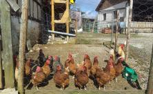 Tierhaltung nachhaltig