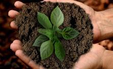 Nachhaltigkeit Bewahrung der Schöpfung